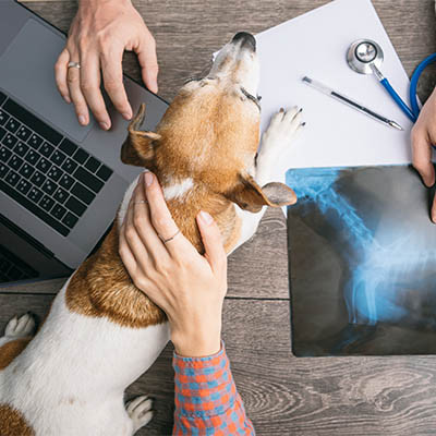 Veterinarians Need to Prioritize Their Security Solutions